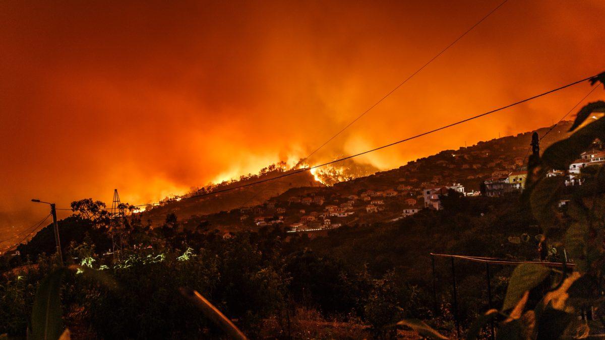 Feuer im Amazonas